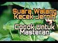 Suara Belalang Kecek Jernih Untuk Masteran Lovebird  Mp3 - Mp4 Download