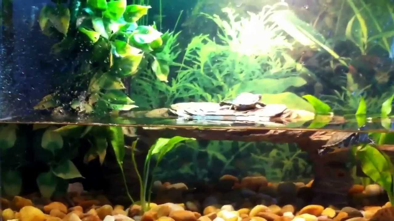 Turtle tank set up for Yellow belly slider hatchli - YouTube