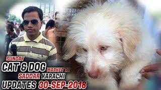 Dog & Cat Market Saddar Karachi Latest Updates 30-9-2018(Jamshed Asmi Informative Channel)Urdu/Hindi