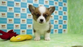 「きくちペット」かわいい仔犬仔猫の専門店です。神奈川に3店舗のネッ...