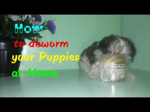 How To Deworm Your Dog Puppy Pets At Home Youtube
