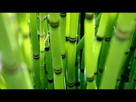 бамбук как красиво оформить счастья фото