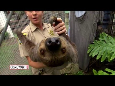 County Jail's Animal Farm Gives Inmates a Second Chance - Crime Watch Daily