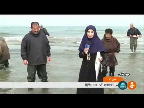 Iran Beggining of 1396 Fishing season, Anzali port, Caspian sea آغاز فصل ماهيگيري بندرانزلي ايران
