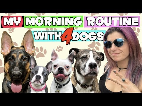My morning routine with FOUR DOGS