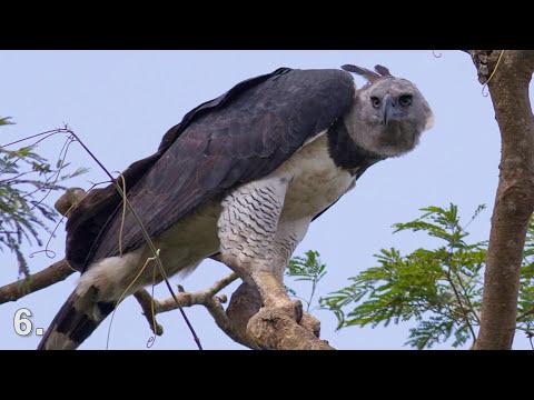 8 NAJSMRTONOSNIJIH Životinja AMAZONA!!