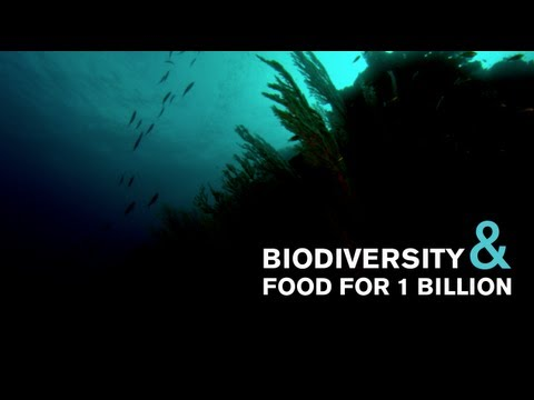 How to Feed the World with an Abundant Ocean