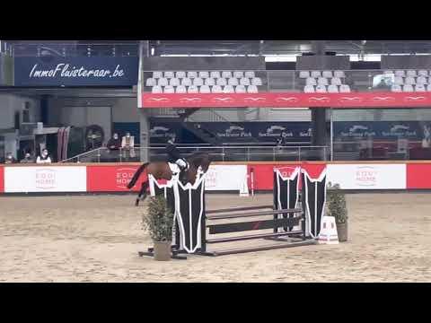 Revell V stallion competition
