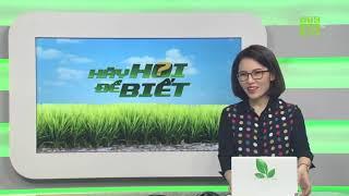 Hoa mai vàng nở sớm, người trồng tá hỏa | Hãy hỏi để biết 21/10/2019 | VTC16