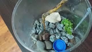 Moje ślimaki i ich terrarium oraz rzeczy
