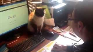 Смешной кот, не отдает мышь