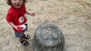 Seyşeller doğa parkı gezisi 300 kiloluk kaplumbağalar vardı