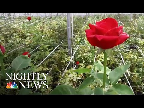 How A Connecticut Nonprofit Aims To Foster Employment For Individuals With Autism | NBC Nightly News