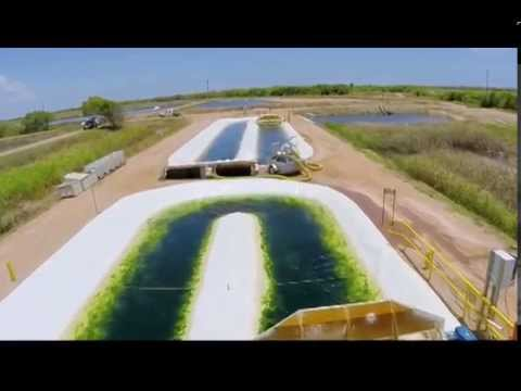 Innovative water bioremediation: algae for sustainable aquac