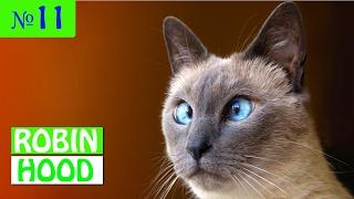 ПРИКОЛЫ 2017 с животными. Смешные Коты, Собаки, Попугаи // Funny Dogs Cats Compilation. Январь №11