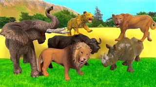 Lots of Zoo Wild Animals/Real Safari Videos And Schleich Toys/Learn Colors For Children