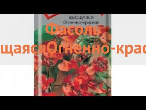 Фасоль ветвистейший Вьющаяся Огненно красная 🌿 обзор: как сажать, семена фасоли