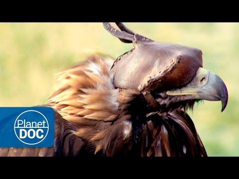 Hunters: Golden Eagle