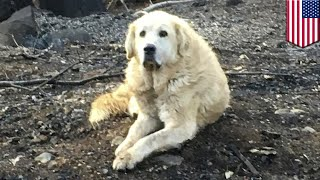 Dog guards burned down home for 1 month until owner returns - TomoNews
