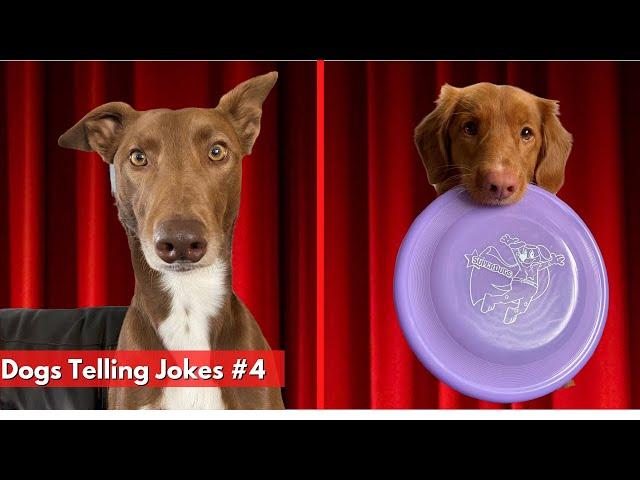 Dogs Telling Jokes Pt 4