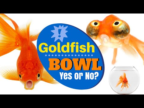 Can I Keep My Goldfish In A Glass Bowl | Goldfish Myth Debunked