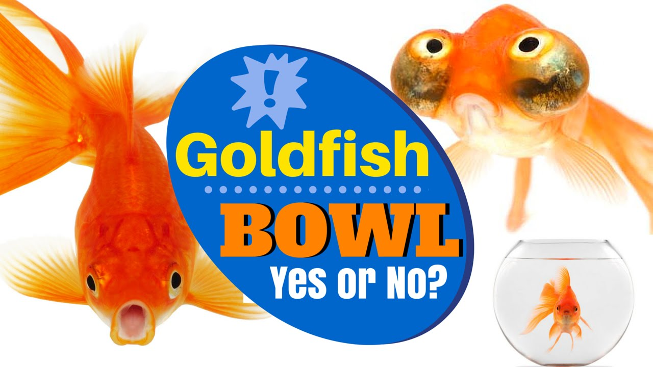Felt Gold Fish bowl Included