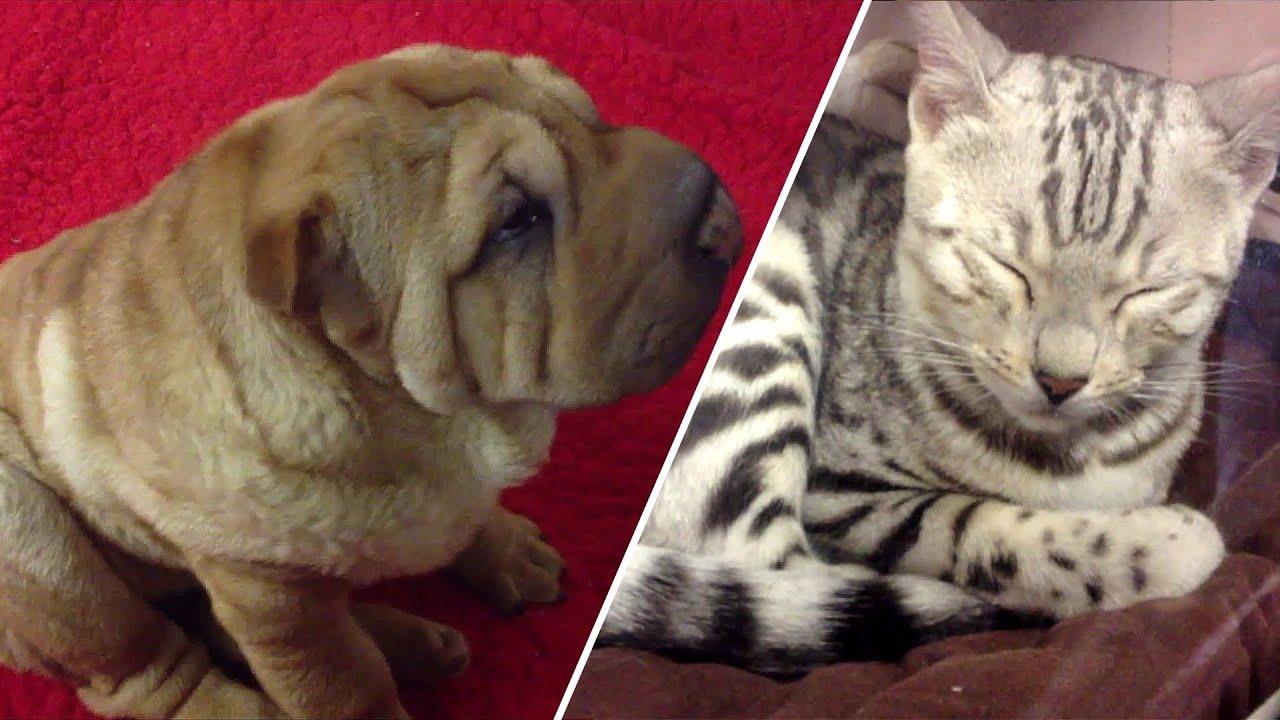 Salon chiens et chats paris 2013 youtube - Chien de salon photos ...