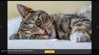 Познавательный мир: зачем котам усы.