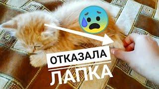 У котенка отказала лапка? Последняя часть про котят, которые остались без мамы.