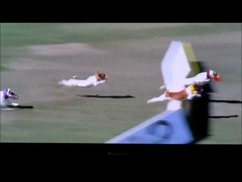 Jack Russell Terrier Does A Front Flip While Jumping Hurdles