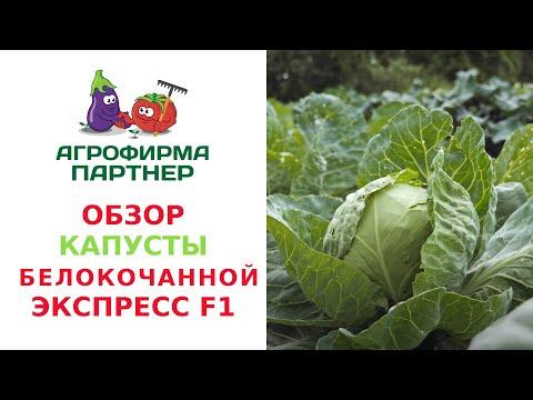 ОБЗОР КАПУСТЫ БЕЛОКОЧАННОЙ ЭКСПРЕСС F1