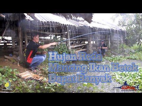 H-2 Idul Fitri - Mancing Ikan Betok di Pinggiran Kolam Abok