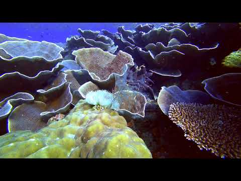 Palawan-Dives-05-South-Minilok-North-Rock-Paul-Ranky-4K