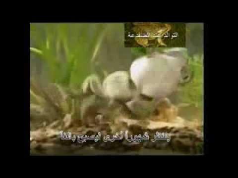 دورة حياة البطريق