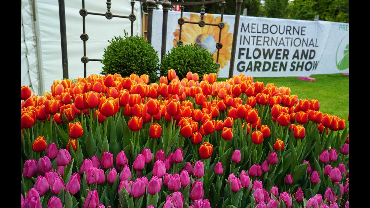 melbourne international flower and garden show | top events in melbourne
