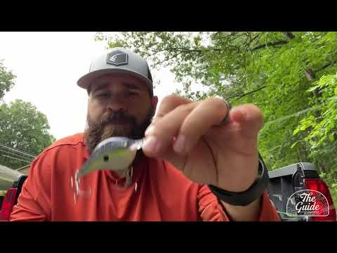 Josh Little Lake Allatoona Special Video Fishing Report 7 6 20