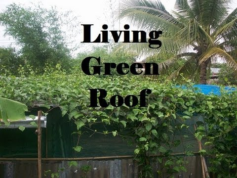 roof planting serene sun house | Growing a living green roof for shade from the sun - YouTube