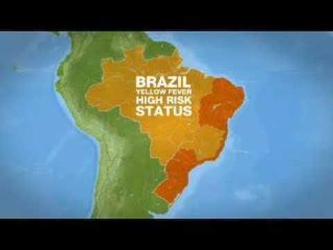 Fears of Yellow Fever in Brazil - 13 Jan 08