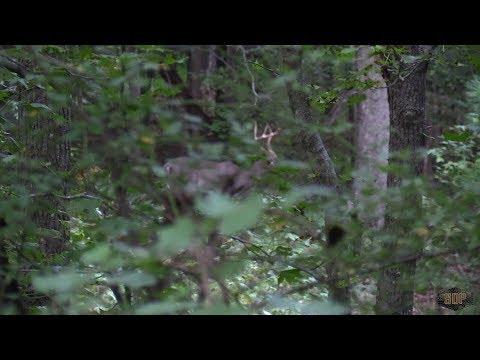 EP. 2- North Carolina HURRICANE BUCK! Early Season Bow Kill.