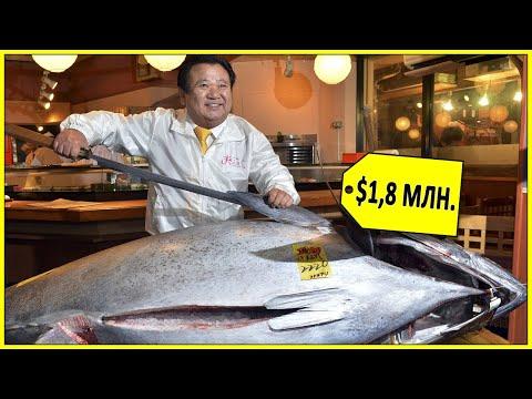 Почему голубой тунец такой дорогой