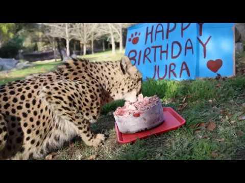 Jura's birthday