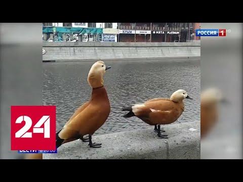 Очищающая самоизоляция: московская атмосфера стала чище в 5 раз - Россия 24