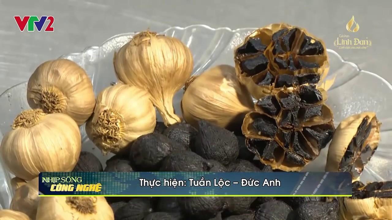Tỏi đen Linh Đan VTV2   Tỏi đen – công dụng – cách làm tỏi đen (Linh Dan on VTV2 Vietnam Television)