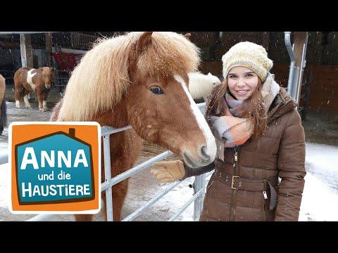 Islandpferd | Information für Kinder | Anna und die Haustiere