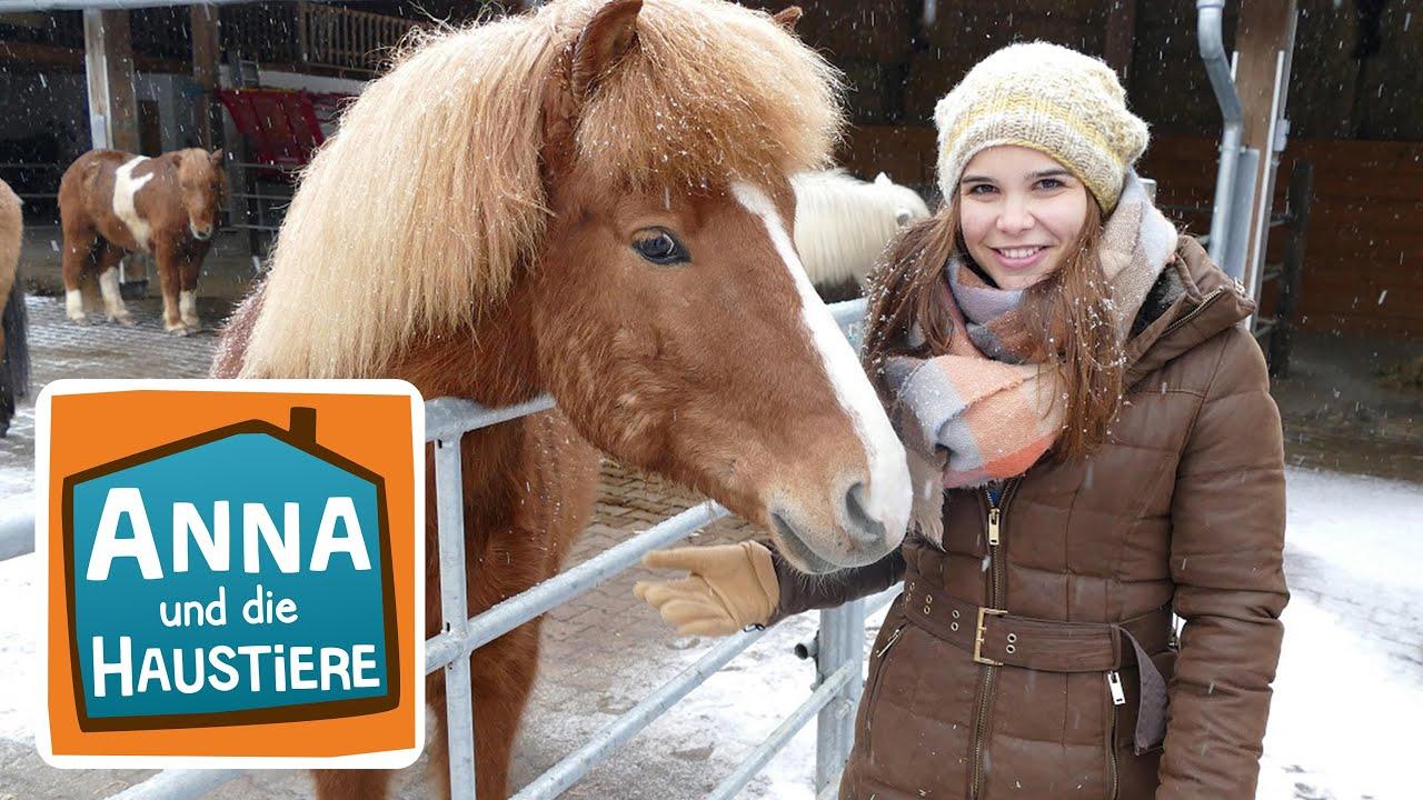 Islandpferd Information Fur Kinder Anna Und Die Haustiere Youtube