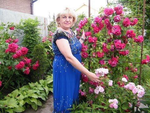Мед белой розы полезные свойства и противопоказания