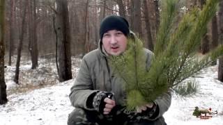 Пару веток и пенёк вот на ёлочку намёк:)