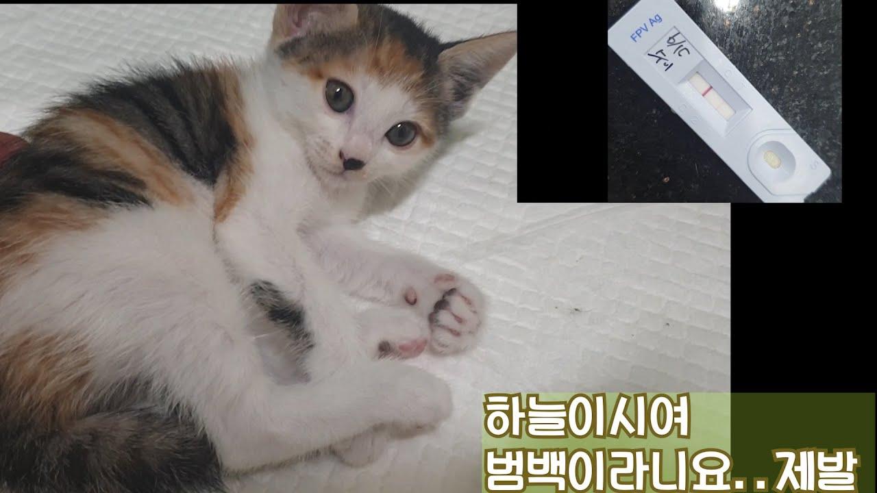 수이의 진료 결과 --범백혈구 감소증 ( Feline panleukopenia)/파보 바이러스(Feline parvo virus, FPV)