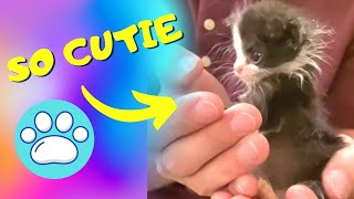 Baby Cats - Cute and Funny Cat Videos Compilation - Gatos Fotinhos - HalineCor - #shorts