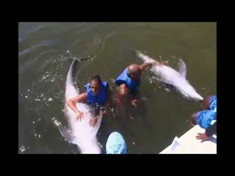 Swimming with dolphins Cuba Cayo Coco